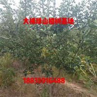 吕梁山楂树·吕梁山楂树价格·大同山楂树·大同山楂树供应