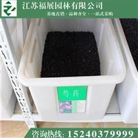 芍药别称离草、婪尾春、余容、犁食、没骨花 芍药种子价格 照片