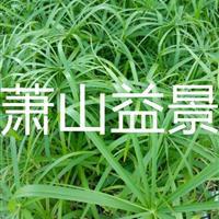 旱伞草、小香蒲、马蔺、狼尾草、水芹、花菖蒲、花叶菖蒲、黄菖蒲