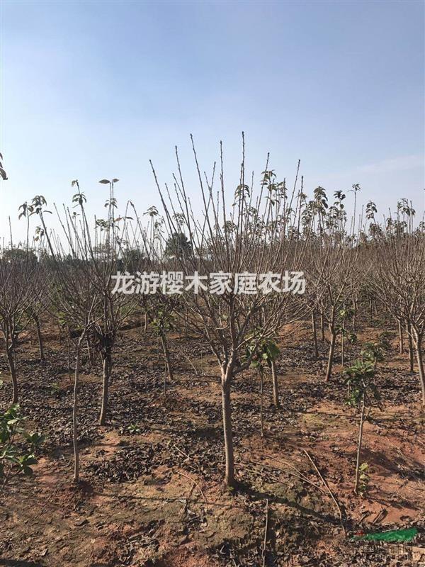龙游樱木家庭农场