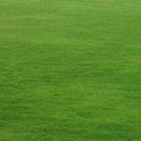 马尼拉草坪,百慕大,中华结缕草,高羊茅,黑麦草混播四季青