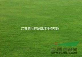 江苏泗洪鑫源草坪种植基地
