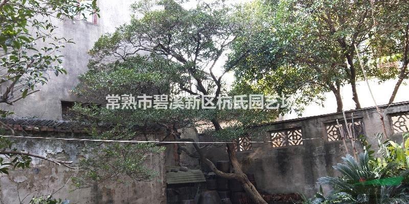 常熟市碧溪新区杭氏园艺场
