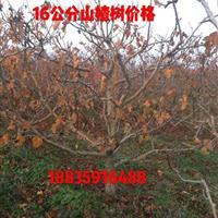 哪里有15公分山楂树?山西15公分山楂树价格·供应山楂树