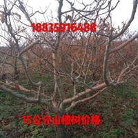 山楂树粗度15公分多少钱·哪里有粗度15公分山楂树?急