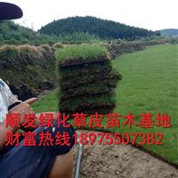 马尼拉草皮价格不稳定持续涨价,湖南马尼拉草卷价格,