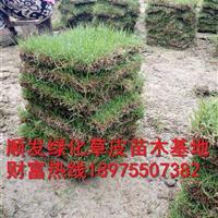 湖南马尼拉草皮*新价格是多少,采购郴州马尼拉草坪草籽