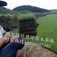 湖南省品质好价格优的马尼拉草皮有顺发绿化草皮苗木基地的草