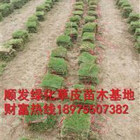 湖南郴州特价马尼拉草皮,湖南优质马尼拉草坪批发价,四季青草坪