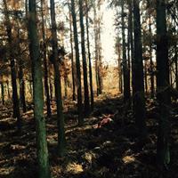 江西供应6-8公分的水杉 量大