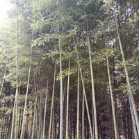 青竹、金镶玉竹、紫竹、早园竹、刚竹、淡竹、小毛竹