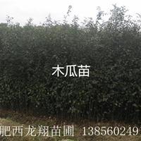 供应安徽合肥肥西1公分木瓜、2公分木瓜、3公分木瓜