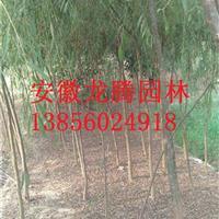安徽合肥肥西柳树、垂柳、垂丝海棠