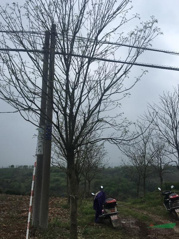 浙江长兴泗安长洲苗木场