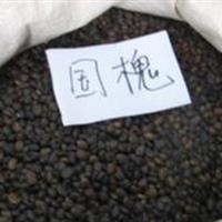 国槐种子价格 国槐苗供应 国槐树批发 国槐基地种植方法