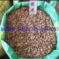桂花種子價格 桂花種子種植方法 桂花種子行情