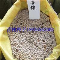 苦楝种子价格 苦楝种子种植方法 苦楝树苗图片 苦楝供应
