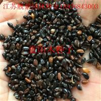 重阳木种子报价 重阳木种子种植方法及简介 重阳木供应