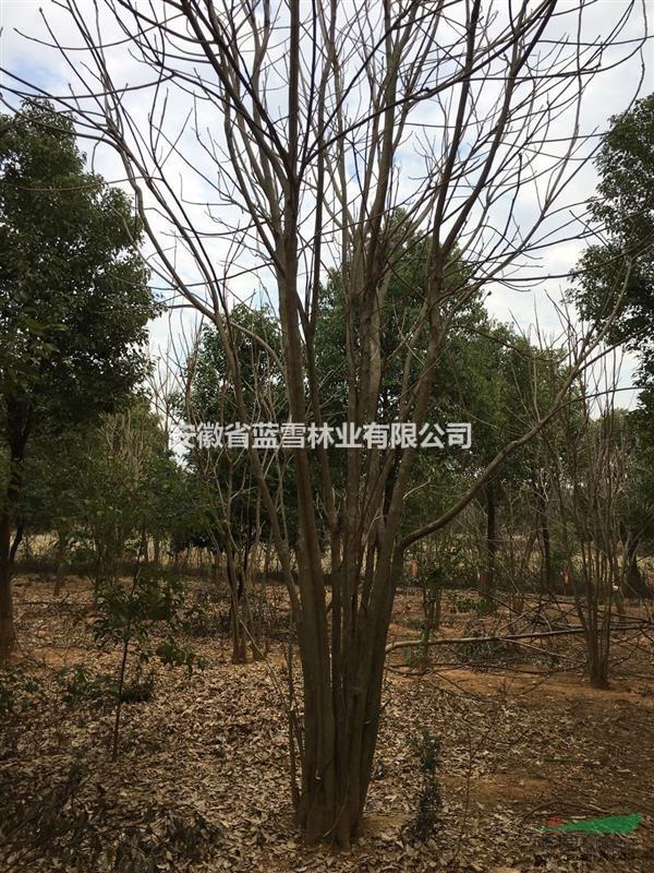 安徽省蓝雪林业有限公司