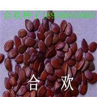 合歡種子報價 合歡種子播種方法及簡介 林木種子批發