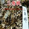 三角枫种子报价 三角枫种子播种方法 林木种子批发