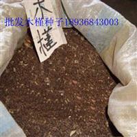 木槿种子报价 木槿种子播种方法 林木种子批发