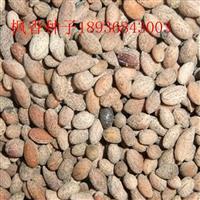 枫香种子报价 枫香种子播种方法 林木种子供应