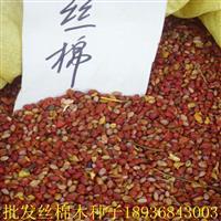丝棉木种子价格 丝棉木种子种植方法 林木种子批发