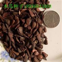 木瓜种子价格 木瓜种子播种方法 林木种子供应