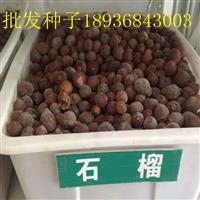 软籽石榴种子价格 石榴种子播种方法 果树种子批发