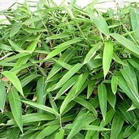 箬竹 箬竹小苗  专业彩票平台绿化  小区绿化
