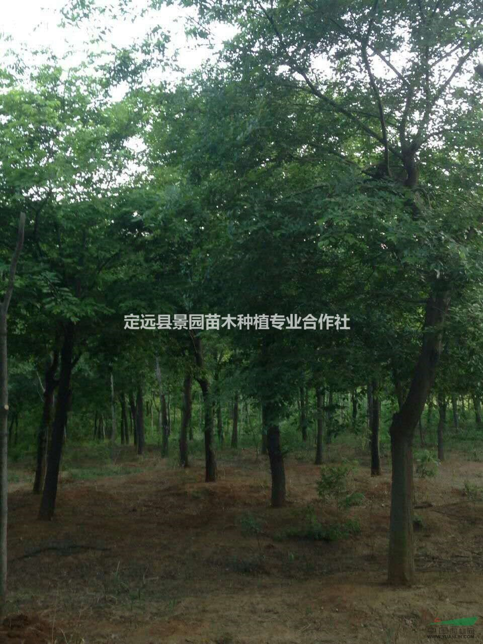 定远县景园苗木种植专业合作社