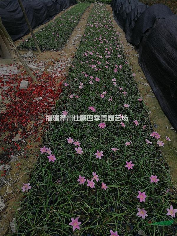 福建漳州仕鹏四季青园艺场