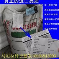 马尼拉种子价格 马尼拉种子播种方法及简介 草坪种子批发