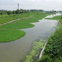 杭州萧山传武苗圃基地直销各种优质睡莲,和各种优质荷花。