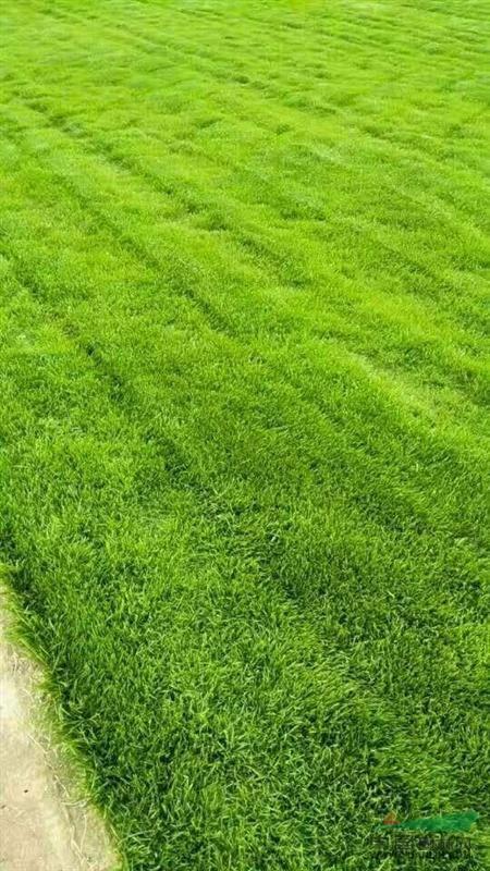 栾城区顺收农作物种植基地