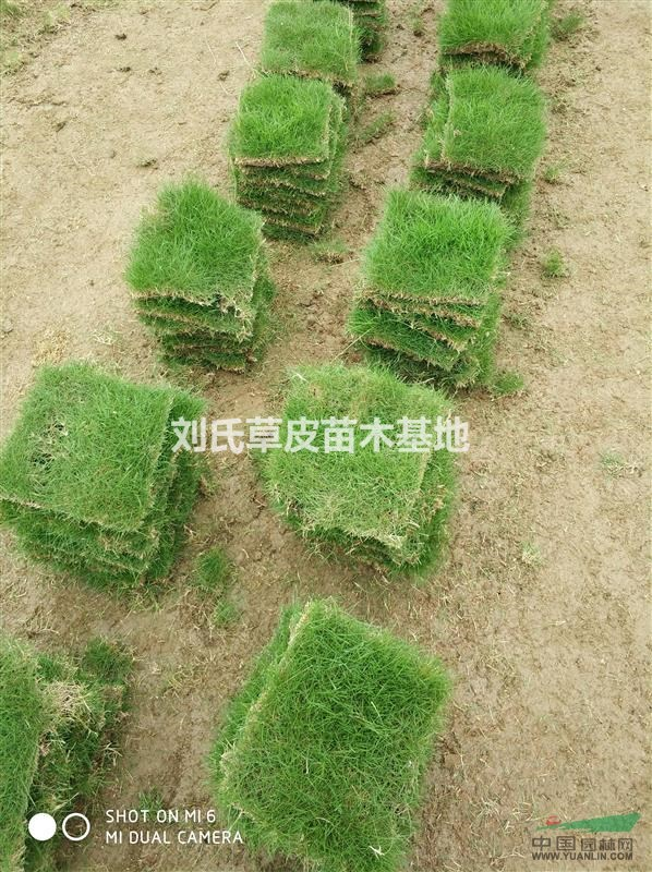 刘氏草皮苗木基地