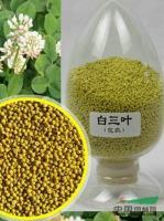 江苏白三叶种子最新报价/白三叶种子图片