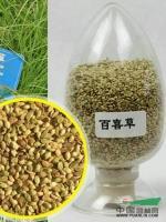 江苏百喜草种子最新报价/百喜草种子图片