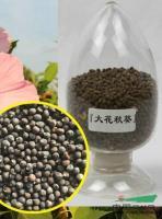 大花秋葵种子供应/大花秋葵种子图片