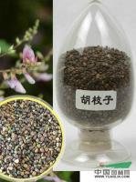 江苏胡枝子种子最新报价/胡枝子种子图片