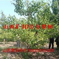 山西梨树·梨树苗·梨树种植基地·梨树产地报价·梨树用途详情