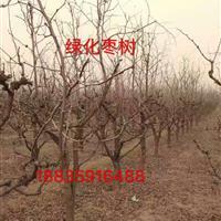 枣树山西哪里多?大面积种植枣树地区是什么地方?山西枣树基地