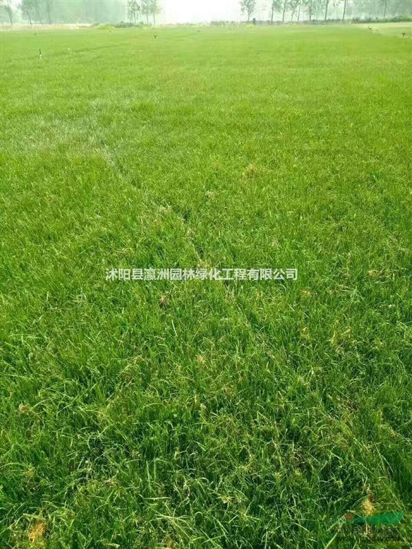沭阳县瀛洲园林绿化工程有限公司