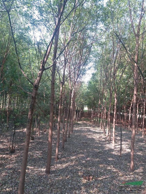 山东泰安新型苗圃