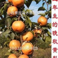 山西8公分梨树价格紧急·山西紧急出售8-10公分占地梨树价格