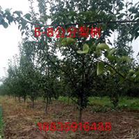 粗度8公分10公分梨树多少钱?哪里有出售占地用的梨树?