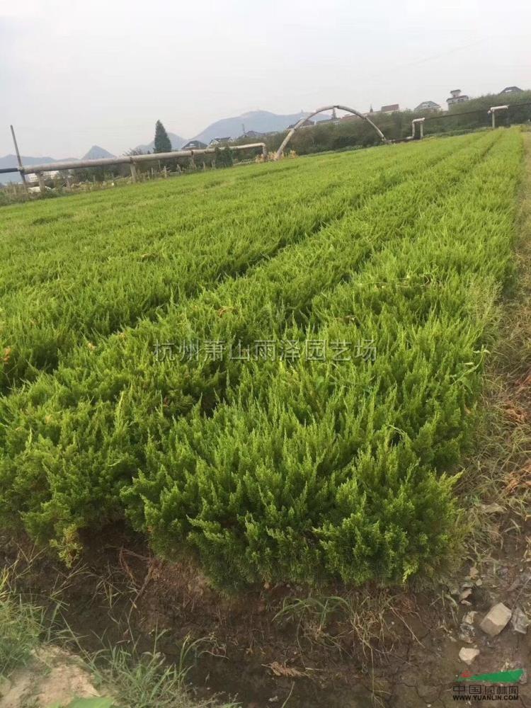 杭州萧山雨泽园艺场