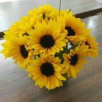 向日葵鲜切花种子