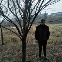 浙江湖州供应供应大量8-16公分鸡爪槭